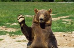 Плюшевому другу... Символ медведя Виктория Андреева, юнгианский аналитик, песочный терапевт